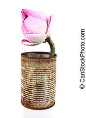 pink lotus on white background
