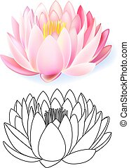 Pink lotus pattern flower set isolated on white background...