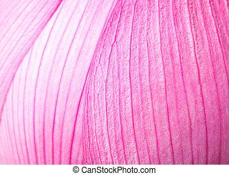 Pink lotus petal close up