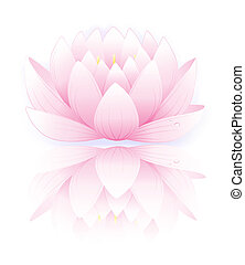 Pink lotus - Vector illustration of pink lotus isolated on...