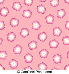 Pink Morning Glory Flower on Pink Background. Vector...