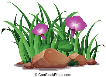 Pink morning glory in the bush illustration