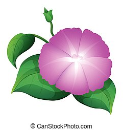 Pink morning glory with green leaves illustration