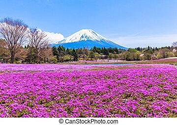 Pink moss phlox flowers and Mt Fuji - Pink moss phlox ...