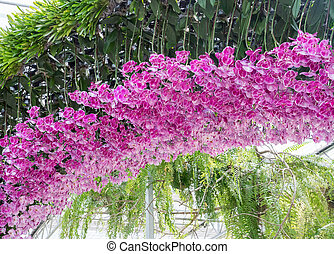 Pink orchid arch.