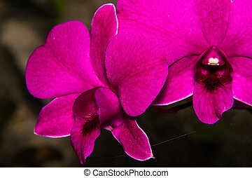 Pink orchid flower