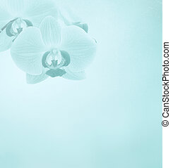 Pink orchid flowers on a background