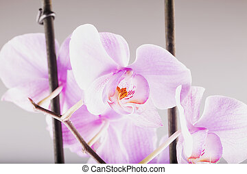 Pink orchid in close up