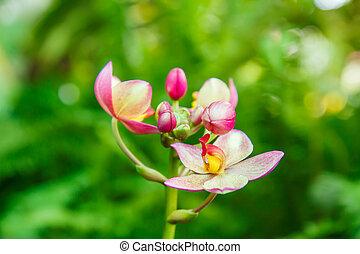 Pink orchid in garden