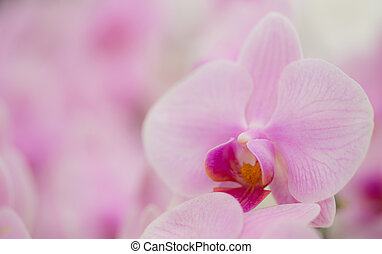 Pink orchid in the garden