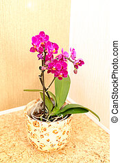 Pink orchid in the interior of the room