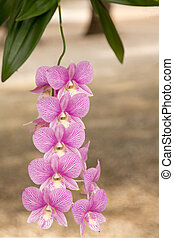 pink Orchidaceae, commonly known as the orchid.