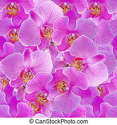Pink orchids. Seamless pattern.
