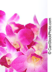 Close up of pink orchis. Beautiful background