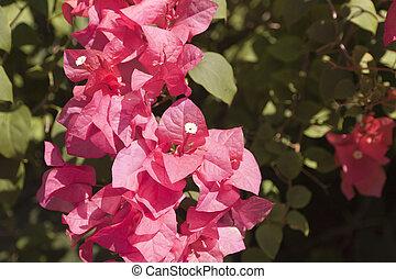 pink paper flower
