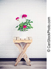 pink pelargonium in white pot standing on wooden chair against w