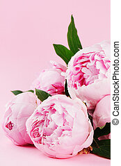 Pink peonies on pastel background