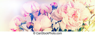 Pink peonies on pastel background with copyspace