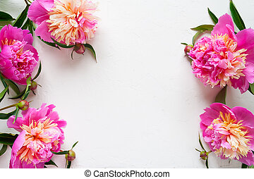 Pink peonies on white background