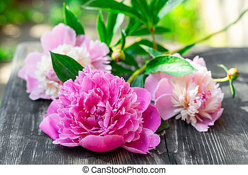 Pink peonies on wooden background, closeup view
