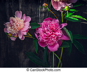 Pink peonies on woooden background, top view