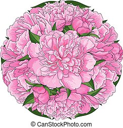 Pink peony bouquet in round shape isolated on white background.