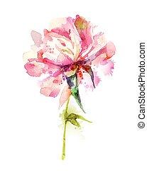 pink peony - The single flowering pink peony