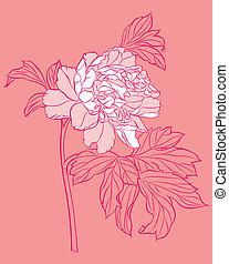 pink peony on pink background