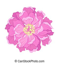 Pink peony flower from above. Vector illustration on a white background.