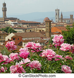 pink peony flowers and fantastic panorama of Florence