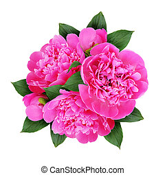 Pink peony flowers bouquet
