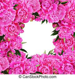 Pink peony flowers frame