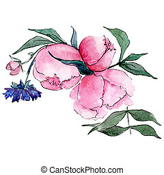 Pink peony. Isolated flower illustration element. Background set. Watercolour drawing aquarelle bouquet.