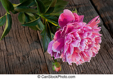 Pink peony on a wooden table.