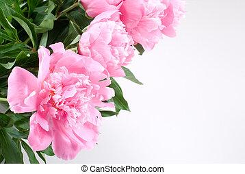 Pink peony - Bright pink peony flower arrangements on white...