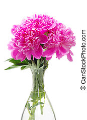 pink peony on a white background