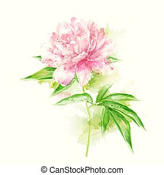 pink peony with blots