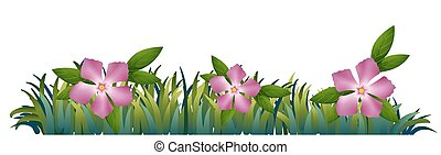 Pink periwinkle flowers in the garden illustration