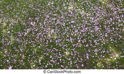 Pink petals falling on the grass