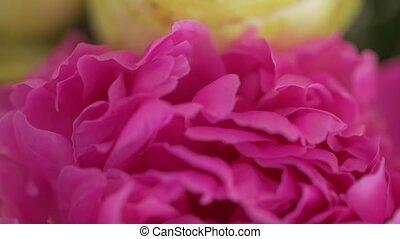 Pink petals macro event decoration camera movement