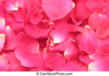 Pink petals of roses build a flowery background