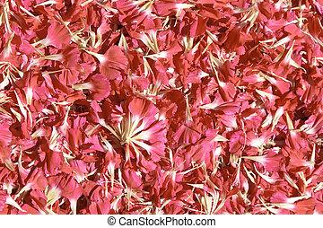 Pink petals quater - Pink petals. Usable as a background