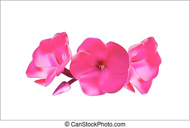 Pink Phlox Flowers Vector Illustration EPS10
