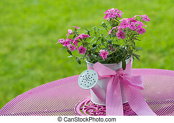 Pink phlox - Little watering can with pink flowers in a ...