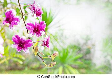 pink purple orchid flower bouquet i