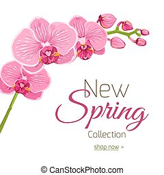 Bright blooming pink purple orchid phalaenopsis branch with flowers and buds. Isolated floral element. Spring collection sale advertising marketing promotional material banner flyer template.