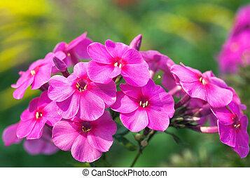 Pink-red flower