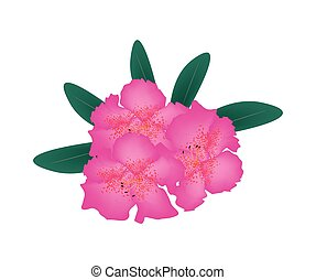 Pink Rhododendron with Green Leaves on White Background