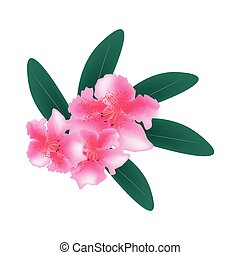 Pink Rhododendron with Green Leaves on White