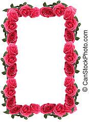 Pink rose border or frame